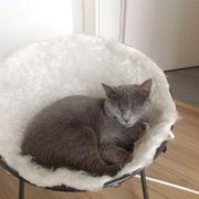 graue Katze entlaufen /