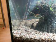 Aquariumzubehör & einige Fische