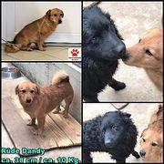Kleiner Hundebub Dandy