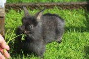 Kaninchenbabys zu verkaufen