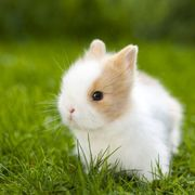 MINI Kaninchen Zwergkaninchen Babykaninchen Kinderlieb
