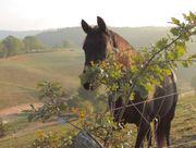 Kurzurlaub in einem ehem Bauernhof