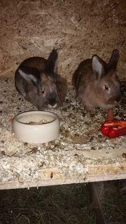 Zwei liebe Kaninchen