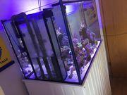 Meerwasseraqurium /Raumteiler komplett