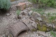 Griechische Landschildkröten männl