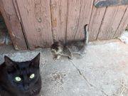 Süßes Katzenbabys zu