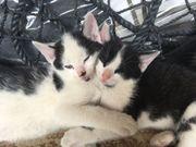 2 süße Katzenbabies