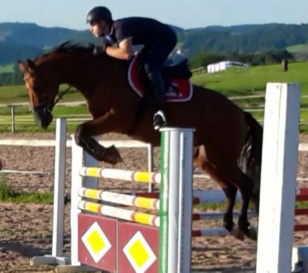 Sportliches Pferd sucht » Pferde