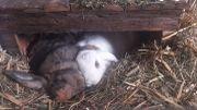 Dringend! Kaninchen Geschwister