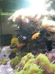 Meerwasseraquarium 250 Liter nur komplett
