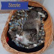 Stevie Kater aus dem Tierschutz