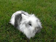 Kaninchen Mädels verschiedenen Alters suchen