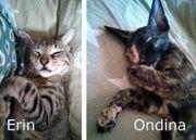 Katzengeschwister Erin Ondina suchen ein