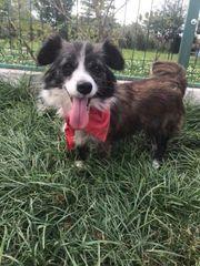 Hundekind Betty träumt vom Glück