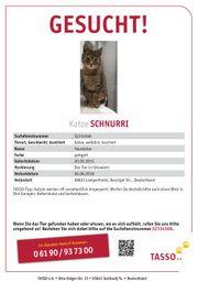 Katze vermisst !!
