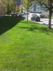 Suche Gartenarbeit !! Rasen