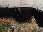Kaninchen (9 Jahre