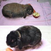 Kaninchen Mutter Sohn