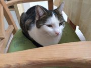 Katze Lissy in Tuchenbach wird