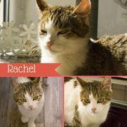 Rachel (Katze aus