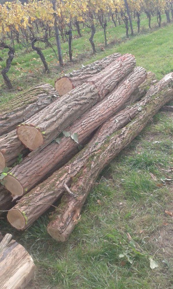 Holzstamme Robinie Naturgewachsen In Bruchsal Kaufen Und
