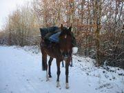Weihnachtsgeschenk für Pilger und Pferdenarren