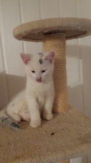 Katzenbabies 10 Wochen