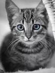 Liebevolle Katzenbetreuung