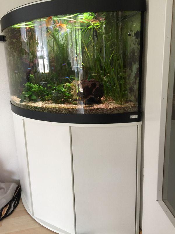 Fluval Eckaquarium Venezia 190 Liter mit... (München) - Aquaristik ...