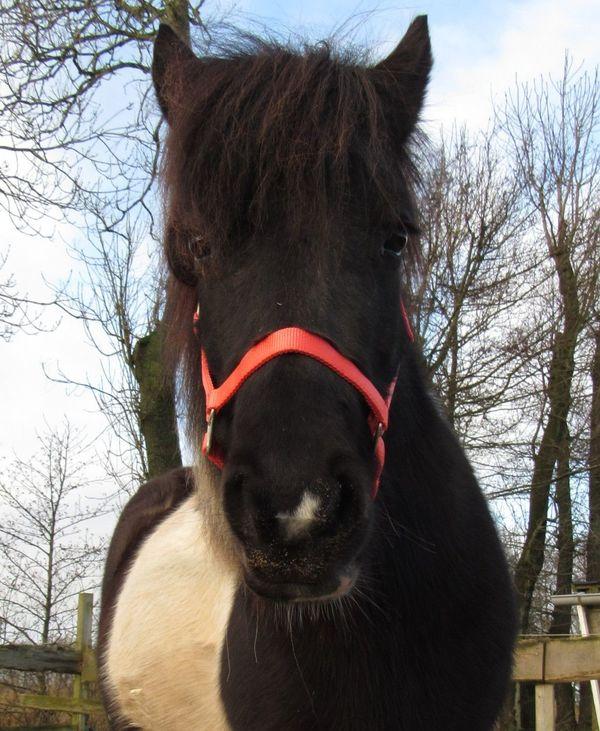 Tolles Zuchtpaket: Hübsche » Pferde