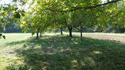 Obstbaumwiese in Ettlingen-Oberweier zu verpachten