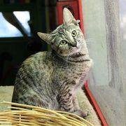 Kätzchen Izzy sucht ihre Menschen