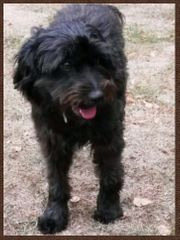 Hund mit Namen Coco