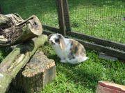 Zuckersüsse Kaninchen-Babys!!!