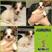 Aurora - die kleine