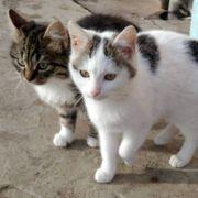 Katzen Tiara und