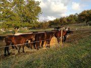 Biete Reitbeteiligung auf Ponys