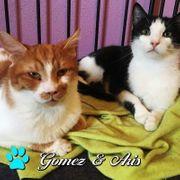 Gomez und Aris suchen ein