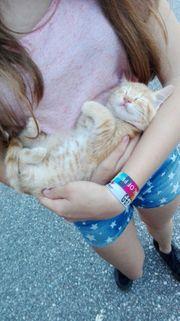 Katzen und Kleintiere Betreuung beim