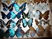 Käfer HEUSCHRECKEN Schmetterlinge