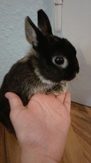 Kaninchen zu verschenken