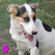 Shadow ein Hundemädl