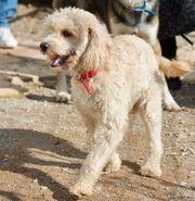 Hunde In Finsing Kaufen Und Verkaufen Bei Quokade