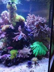 Meerwasser Fische Korallen Technik Aquarium