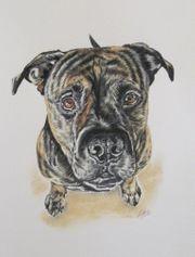 Tiermalerei Tierportraits nach Foto Tierzeichnungen