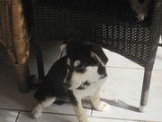 Babu, 6 Monate