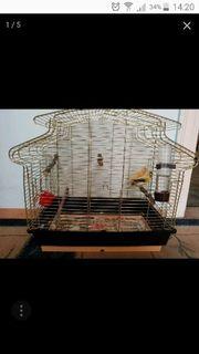 Kanarienvögel mit kafig und Futter