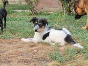 Antonia ca 4 Monate jung
