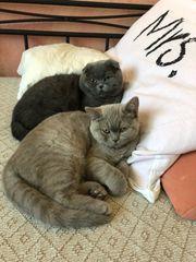 Katzen Pärchen