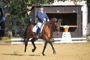 Vermarktung - Beritt - Ausbildung von Pferd